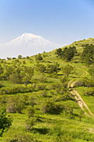 Path leading to Mount Ararat, Armenia, Caucasus, Central Asia, Asia