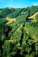 Green ski trails in August in Telluride, Colorado, USA
