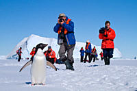 AdÇlie penguin Pygoscelis adeliae near the Antarctic Peninsula, Antarctica MORE INFO The AdÇlie Penguin is a type of penguin common along the entire A...