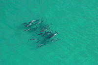 Dolphins The Cape, South Africa