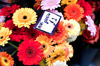 Colourful Gerbera flowers