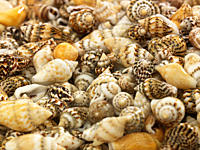 Variety of shells, full frame