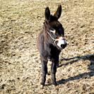 donkey, France