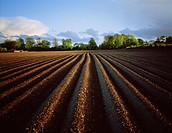 Co Meath, Ireland, Ploughed Potato Field