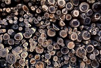 Abstract image of wood pile showing ends of logs