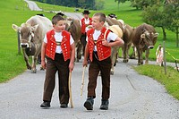 Appenzell, switzerland, children in traditional costume herding cows