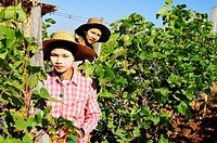 Young workers in an oriental vineyard