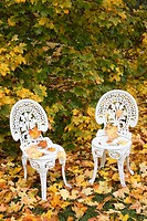 White chairs on yellow leaves in autumn