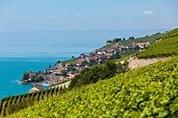 View across the vineyards near Vevey towards St Saforin, Lake Geneva at back, Vevey, Canton Vaud, Lake Geneva, Switzerland, Europe