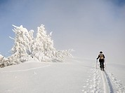 Ski hiker on the ridge of Mt. Unterberg, ski tour, Mt. Unterberg, Lower Austria, Austria, Europe