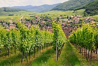 Vineyards, Alsace, France