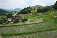 Terraced Fields of Hase, Nose, Osaka, Japan