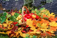 Apples and leaves of autumn in table