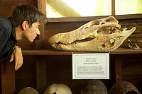 A boy looking at a caiman skull at Tambopata National Reserve, Peru, South America