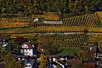 Swiss village and vineyards, Interlaken, Switzerland