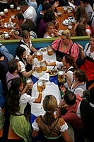 Group of men and women in Bavarian costume enjoying a beer in an Oktoberfest beerhall, Munich, Bavaria, Germany, Europe