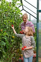 Smiling mother and daughter picking ripe tomatoes in greenhouse garden