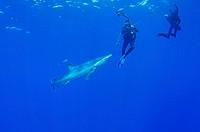 Blue Shark and Underwater Photographer, Prionace glauca, Condor Bank, Faial, Azores, Atlantic Ocean, Portugal
