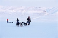 Dogs relay in winter scenery
