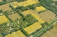 Aerial view of field surrounded by palm trees , Andhra Pradesh , India