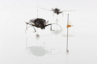 Studio shot of bug specimens on white background