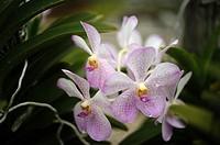 Orchid Garden, Kuching, Sarawak, Malaysia.