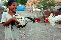 A boy with a cock on the occasion of a cock´s fight with the weekly market with seed of the mountain region to the south of Dili of the capital of the...