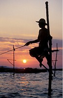 Fishermen fish on traditional art with Weligama in sueden of the island Sri Lanka in the Indian ocean.
