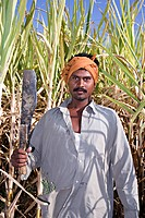 Farmer with knife to cut harvest in morning time , Salunkwadi , Taluka Ambejpgai , Beed , Maharashtra , India MR706E