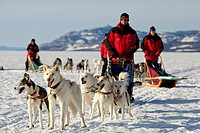 Men, mushers with dog sleds, teams of sled dogs, Alaskan Huskies, mountains behind, frozen Lake Laberge, Yukon Territory, Canada