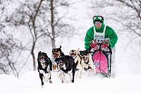 Eurohounds, Scandinavian Hounds, Winterberg Sled Dog Races 2010, Sauerland, North Rhine-Westphalia, Germany, Europe