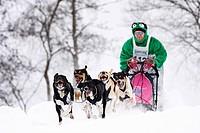 Eurohounds, Scandinavian Hounds, Winterberg Sled Dog Races 2010, Sauerland, North Rhine-Westphalia, Germany, Europe