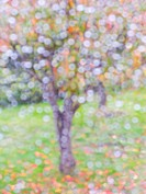 PRUNUS _ AUTUMN LEAVES THROUGH RAIN DROPS ON WINDOW