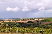 Vineyard of Gaillac, Tarn, France.
