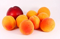 Apricots and nectarine