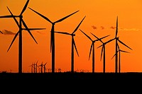 Wind turbines generating electrical power at Horse Hollow Wind Farm, Nolan county, Texas the world´s largest wind power project during sunset