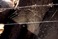 close up of sunlit spiders web on a barbed wire fence