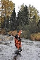 Fly fisherman netting a Dolly Varden char on Deep Creek, Kenai Peninsula, Southcentral Alaska, Autumn
