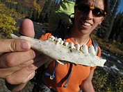 Female backpacker shows the jawbone of a weathered animal while hiking to Sanctuary River in Denali National Park, Interior Alaska, Autumn