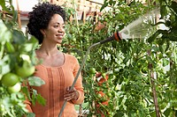 Woman watering tomato plants