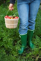 Woman with basket of freshly picked tomatoes