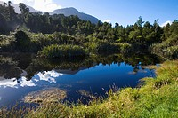 Woodland lake, Westland National Park, New Zealand (thumbnail)