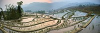 Yuanyang rice paddies, China (thumbnail)