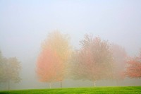 Fall trees shrouded in mist (thumbnail)