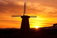 Sunrise over a tulip field with windmill