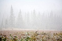 Snow falling in a forest (thumbnail)