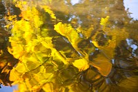 Fall trees reflected on a stream