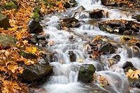 Water running over rocks in Wahkeena Creek