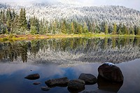 Reflection of snowy forest on lake in Mount Hood National Forest