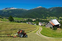 Harvesting hay in Riezlern with a view toward the Hohen Ifen Mountains, Kleinwalsertal, Little Walser Valley, Allgaeu, Vorarlberg, Austria, Europe